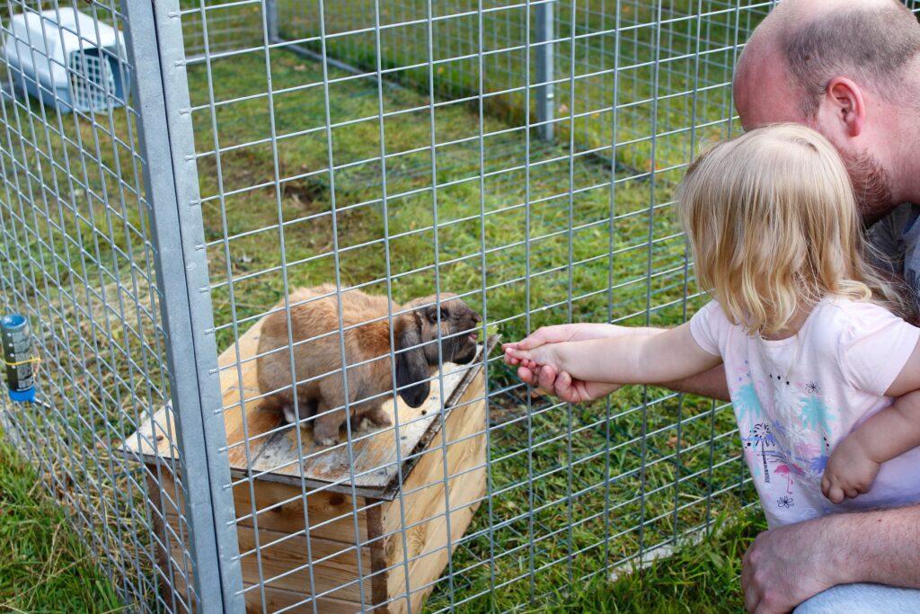 Barn som klappar kanin på Fallebo gård